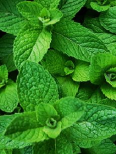 Anayennisi Aromatics Aromatherapy Essential Oils Guide - Peppermint
