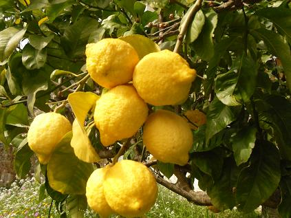 natural-homemade-cleaning-products-aromatherapy-essential-oils-guide-lemon.