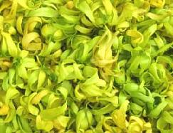 Anayennisi Aromatics Aromatherapy Essential Oils Guide - Ylang-Ylang Essential Oil